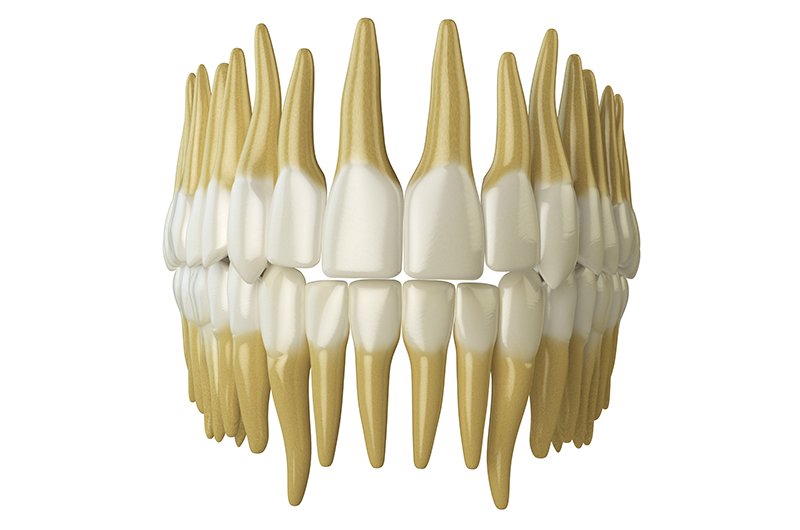 human-teeth-isolated-on-white-PVDT7HT